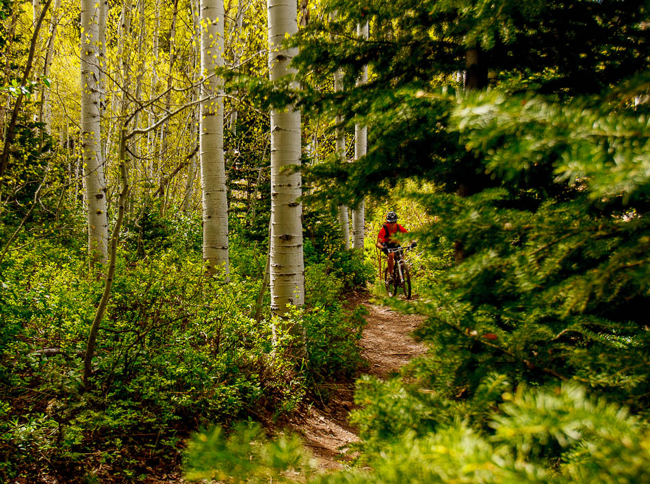 mountain biker on Mid-Mountain Trail, deer valley, park city, utah
